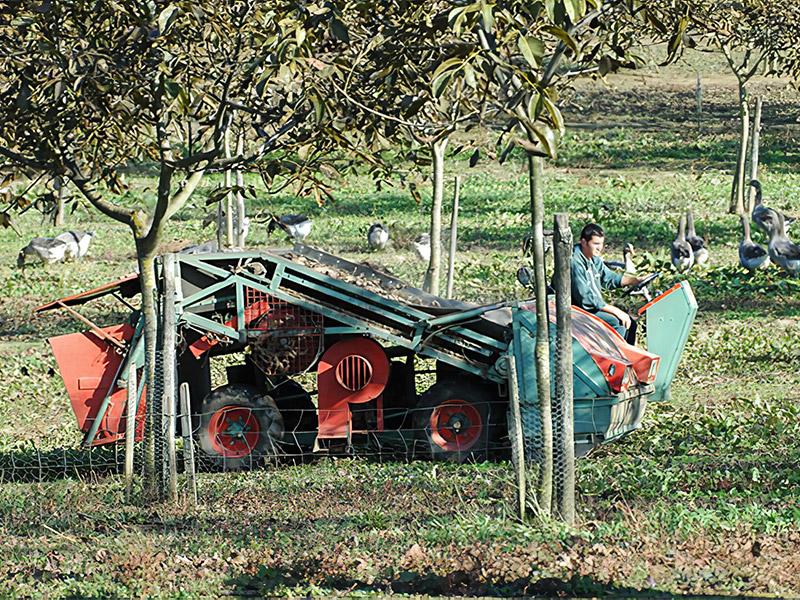 LA FERME DE TURNAC FOIE GRAS DORDOGNE Img 3 238